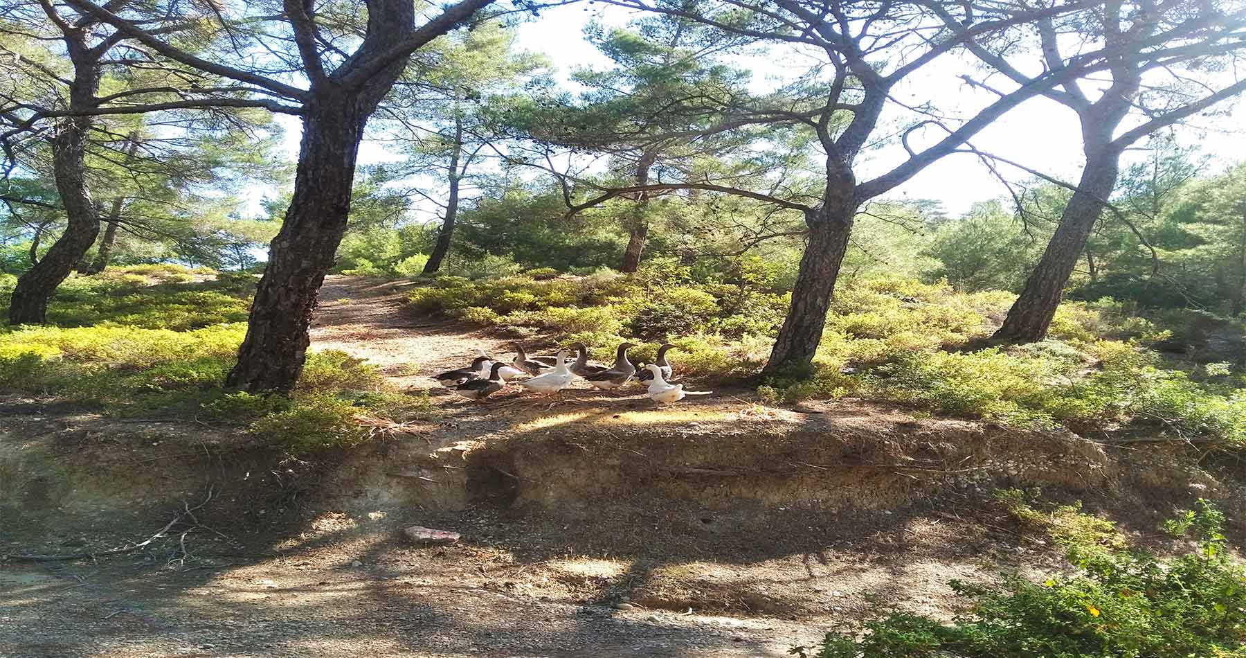 rhodes experiences seven springs hike 8